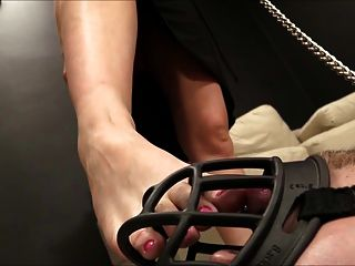 Ballbusting, Foot Worship, Puppy Play, And Femdom Fetish