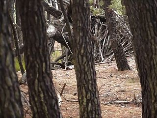 Brenda - Lost In A Strange Forest